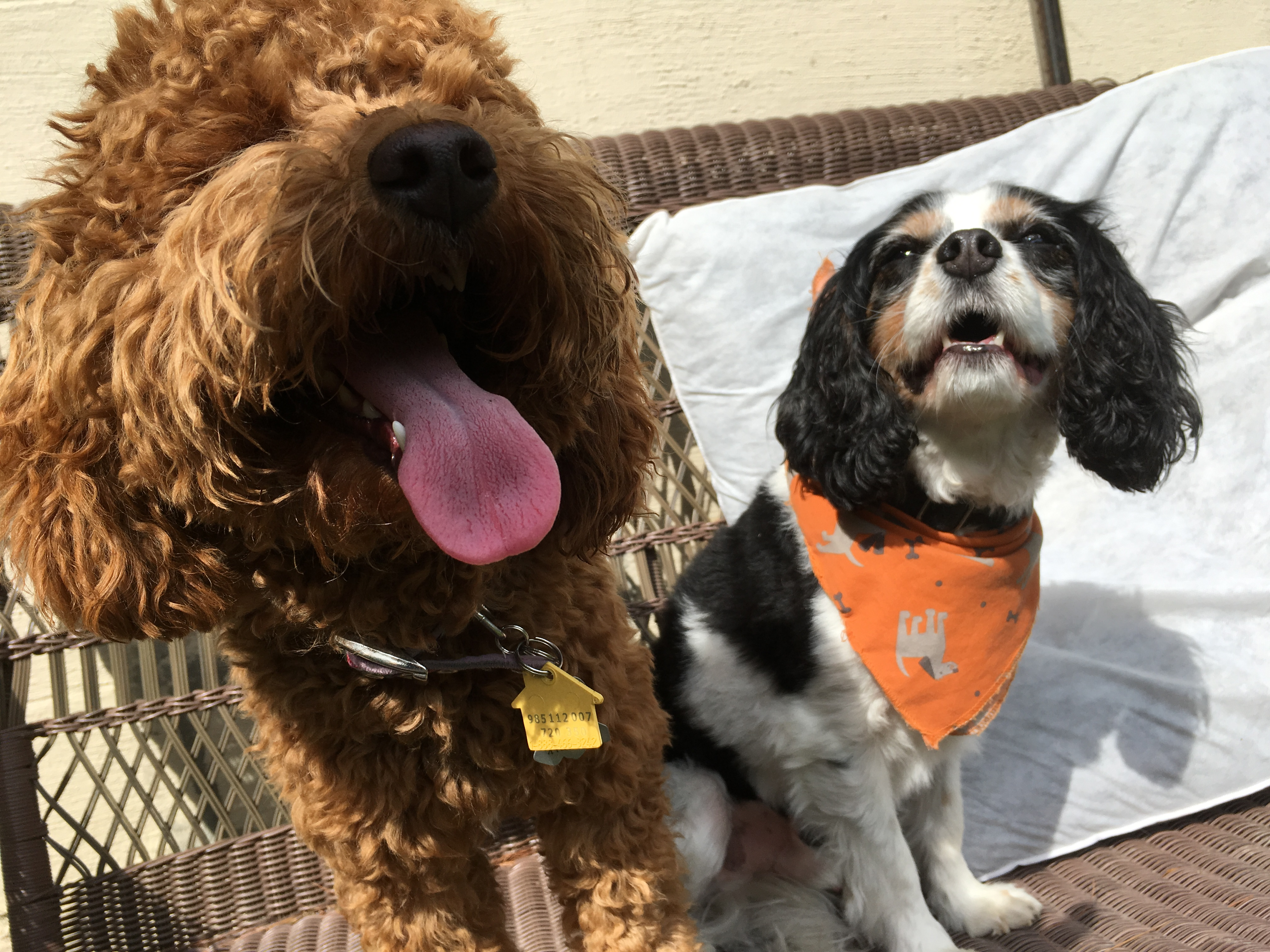 Dog Kennel | near Pleasant Valley NY | Albanhaus Kennels