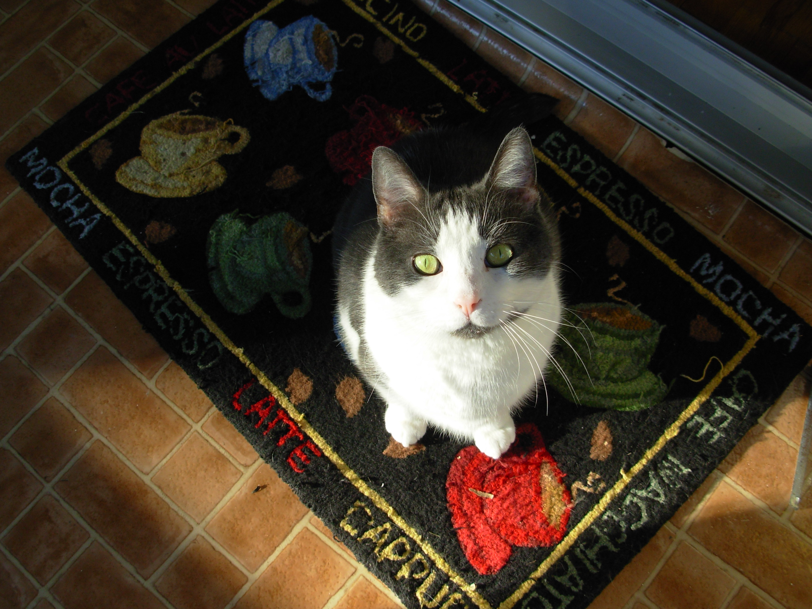 photo of cat with green eyes sitting on door mat
